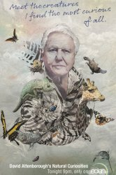Смотреть Девид Аттенборо. Курьезы природного мира онлайн в HD качестве