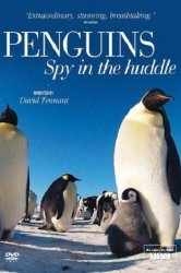 Смотреть Пингвины: Шпион в толпе онлайн в HD качестве