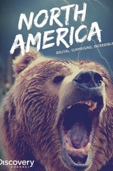 Смотреть Discovery: Северная Америка онлайн в HD качестве 720p