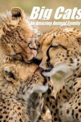 Смотреть Кошки: Удивительная звериная семейка онлайн в HD качестве