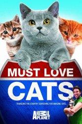 Смотреть Кошек не любить нельзя онлайн в HD качестве