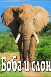 Смотреть Боба и слон онлайн в HD качестве