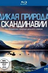 Смотреть Дикая природа Скандинавии онлайн в HD качестве
