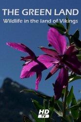 Смотреть Гренландия: Дикая природа страны викингов онлайн в HD качестве