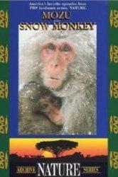 Смотреть Природа (сериал 1982 ...) онлайн в HD качестве