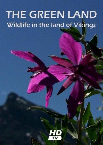 Смотреть Гренландия: Дикая природа страны викингов онлайн в HD качестве 720p