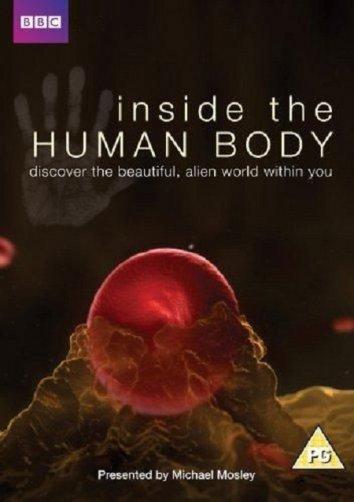 Смотреть Внутри человеческого тела онлайн в HD качестве 720p