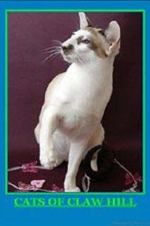Смотреть Кошки Кло-Хилл онлайн в HD качестве