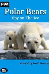 Смотреть Белый медведь: Шпион во льдах онлайн в HD качестве 720p