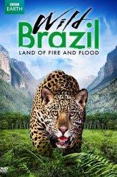 Смотреть Дикая Бразилия онлайн в HD качестве 720p