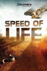 Смотреть Discovery: Скорость жизни онлайн в HD качестве