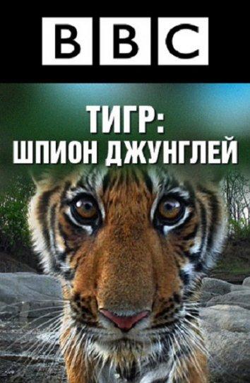 Смотреть BBC: Тигр – Шпион джунглей онлайн в HD качестве 720p