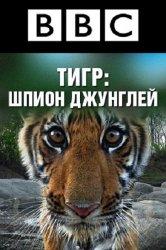 Смотреть BBC: Тигр – Шпион джунглей онлайн в HD качестве