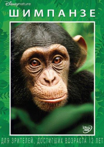 Смотреть Шимпанзе онлайн в HD качестве 720p