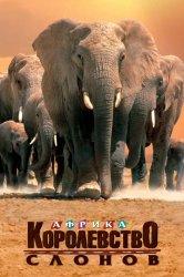 Смотреть Африка – королевство слонов онлайн в HD качестве