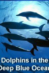 Смотреть Дельфины в океанской синеве онлайн в HD качестве