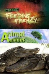 Смотреть Как прокормить крокодила онлайн в HD качестве 720p