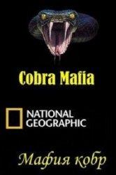 Смотреть Мафия кобр онлайн в HD качестве