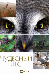 Смотреть Чудесный лес онлайн в HD качестве