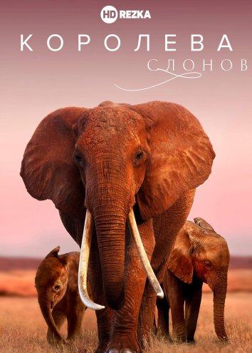 Смотреть Королева слонов онлайн в HD качестве 720p