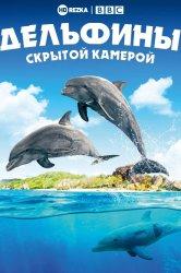 Смотреть Дельфины скрытой камерой онлайн в HD качестве 720p