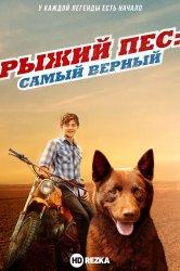Смотреть Рыжий пес: Самый верный онлайн в HD качестве
