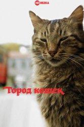 Смотреть Город кошек / Кот онлайн в HD качестве 720p