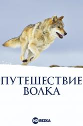 Смотреть Путешествие волка онлайн в HD качестве 720p