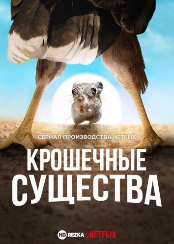 Смотреть Крошечные существа онлайн в HD качестве 720p