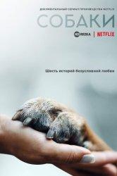 Смотреть Собаки онлайн в HD качестве 720p