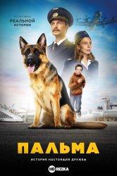 Смотреть Пальма онлайн в HD качестве 720p