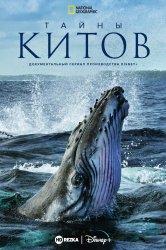 Смотреть Тайны китов онлайн в HD качестве