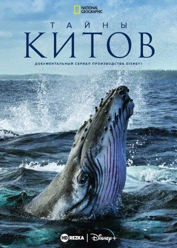Смотреть Тайны китов онлайн в HD качестве 720p