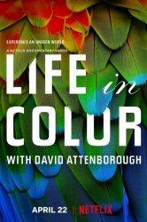 Смотреть Жизнь в цвете с Дэвидом Аттенборо онлайн в HD качестве 720p